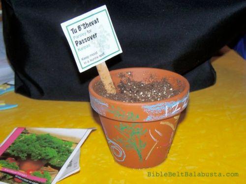 Tu B'Shevat parsley for Pesach karpas