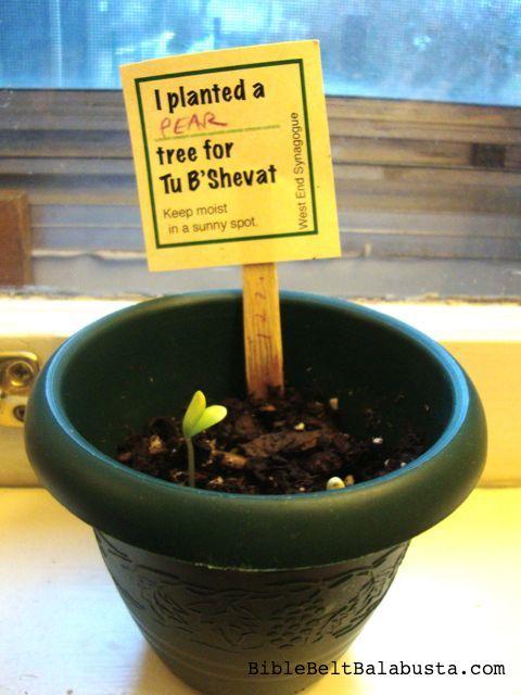 see the seedling emerging?