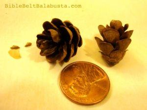 Eastern Hemlock cones