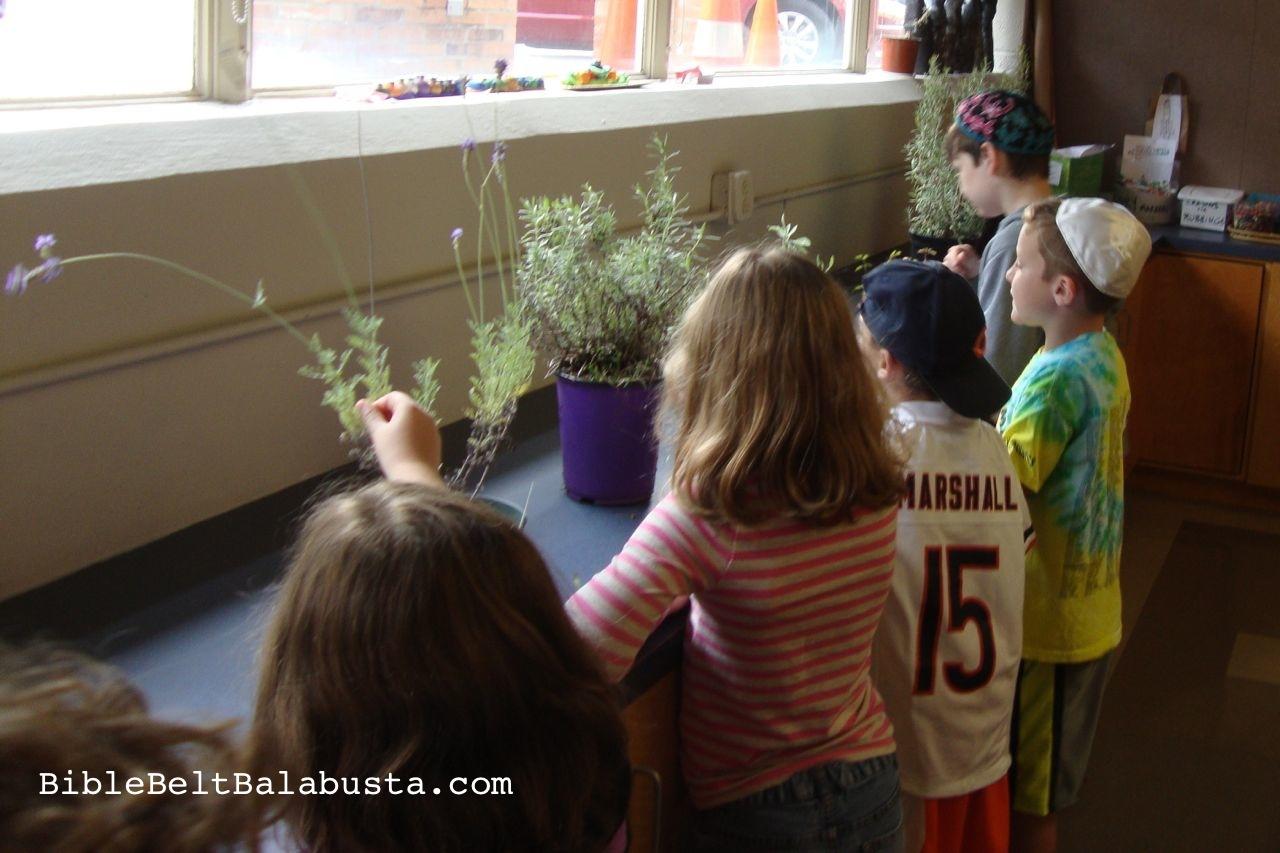 Havdalah Garden in a tub | Bible Belt Balabusta