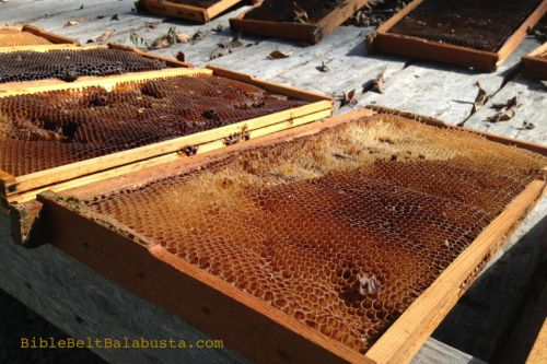 from our fabulous metro park hives